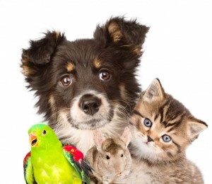 Dog, cat and parrot